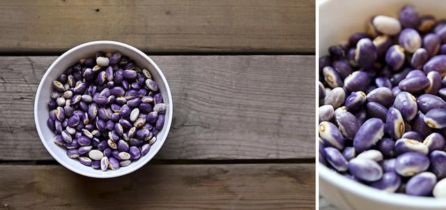 purple heirloom bean harvest