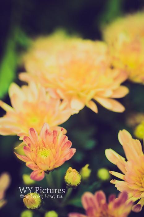 A portrait of flora