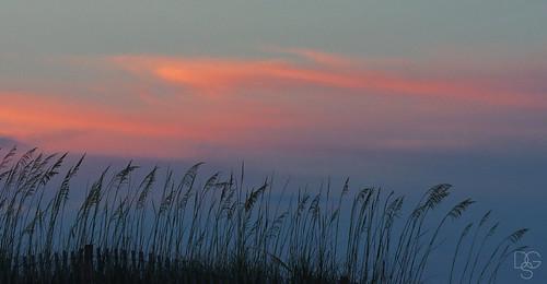 sunset sky grass skyscape florida dunes destin oats seaoats miramarbeach uniolapaniculata