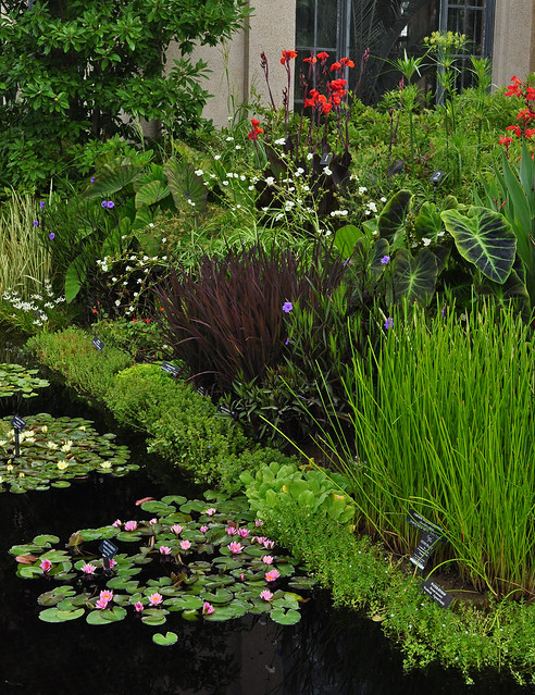 Conservatory - Waterlily Display -  (7)