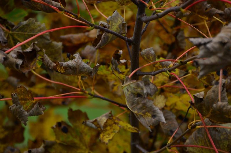 Chaos Blätter