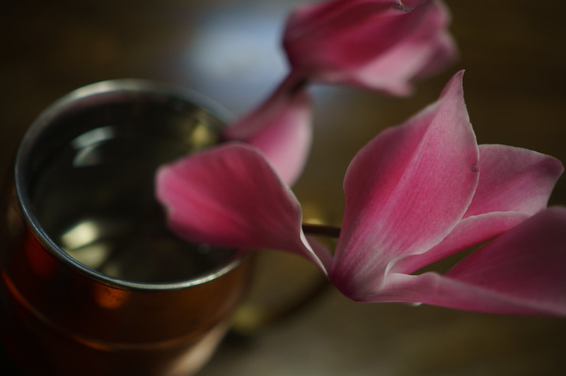 Flowers of cyclamen in a cup