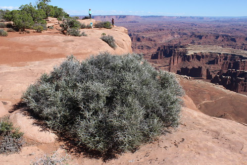 IMG_2382_Grand_View_Point_Island_in_the_Sky_Canyonlands_NP