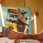 Squirrel in a canoe