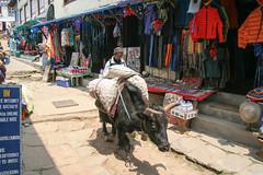 Jaki w Namche Bazar