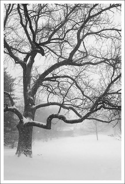 Big Snow 2014-01-05 5