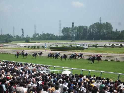 新潟競馬場 Niigata Racecourse
