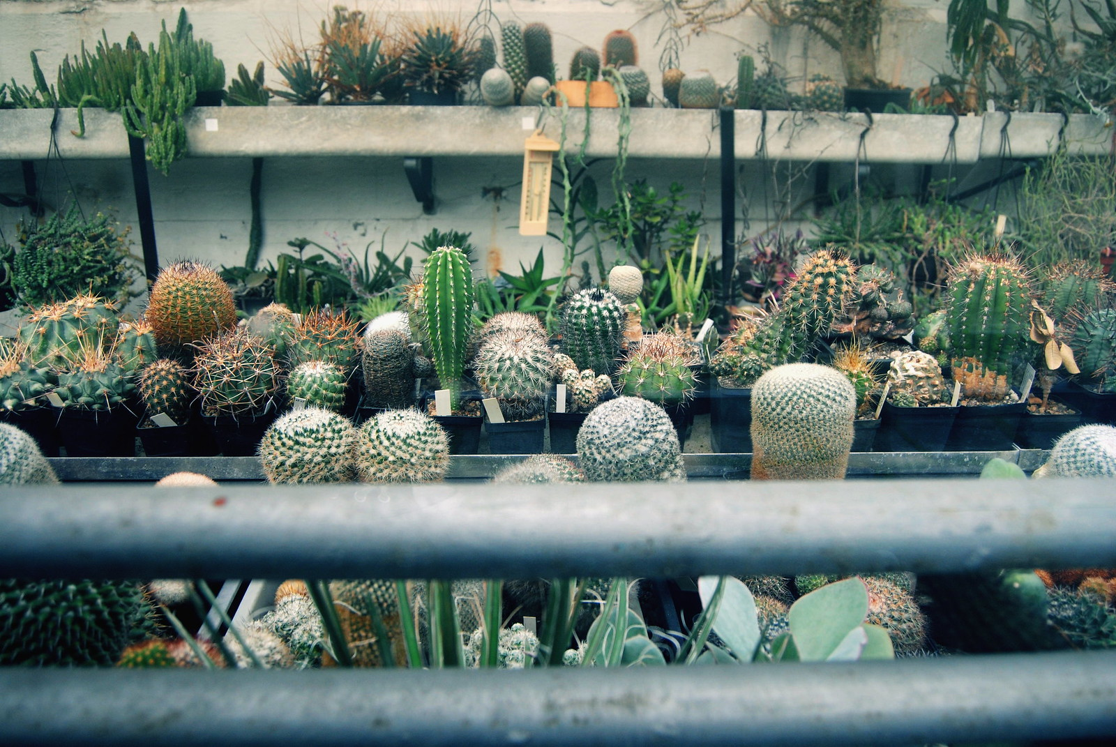 Various types of cacti in the Botanical Garden of Antwerp