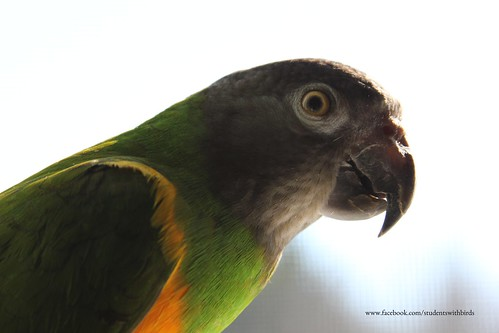 Birds' Arrival 223