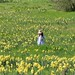 girl in a daffodil field by gwashley