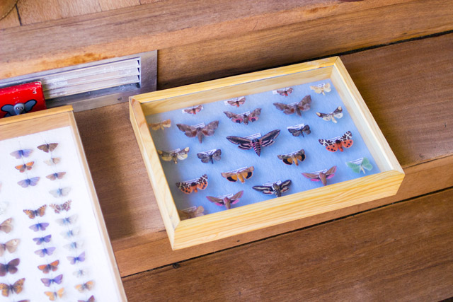 butterflies in a box