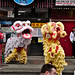 Lion's Dancing by Brian.Neal