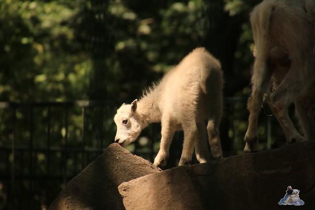 Tierpark Berlin 02.08.2015 0219