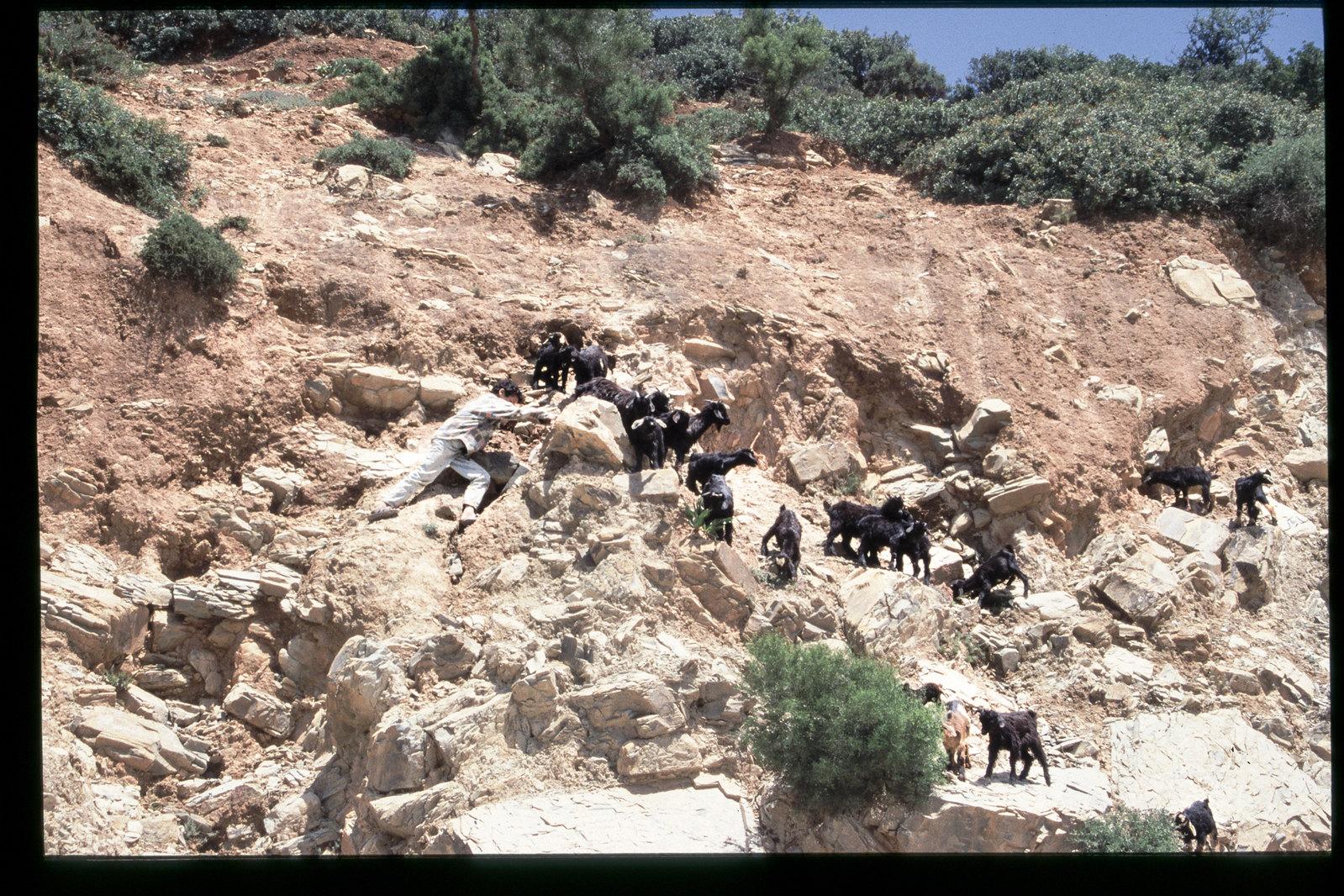 Maroc oriental - Gardien de chèvre