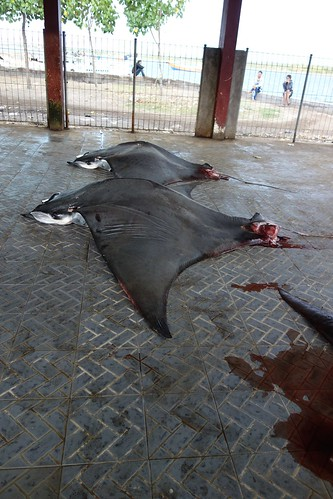 Tanjung Luar: There were three manta rays on this day.