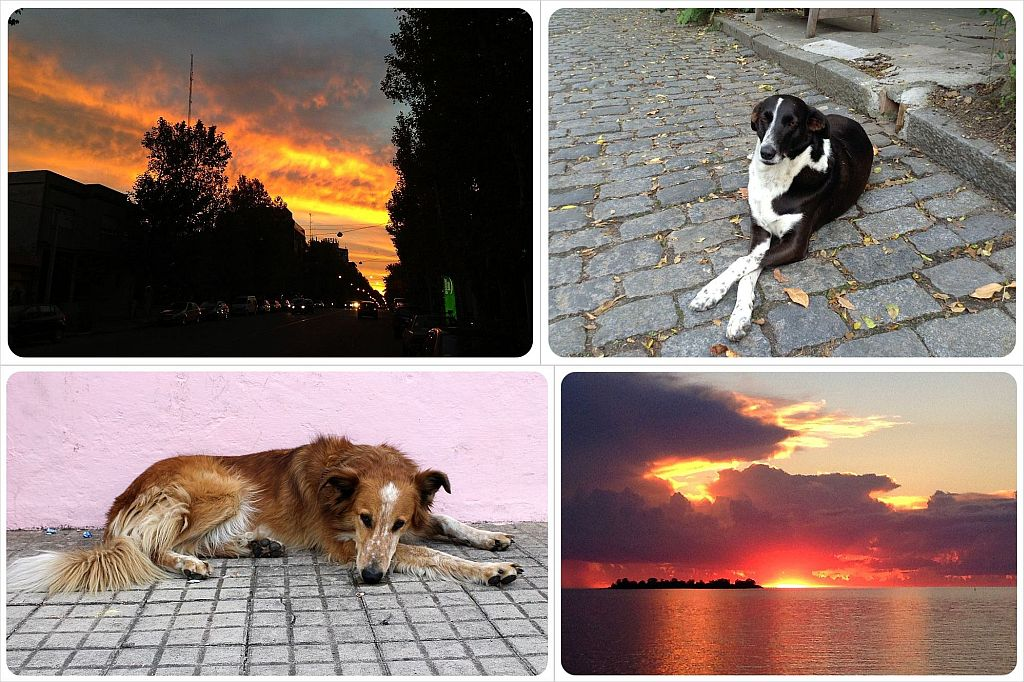 Colonia del Sacramento Pupppies and sunsets