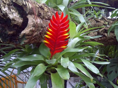 Fleur exotique - exotic flower