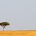 IMG_1100 Acacia Tree Maasai Mara Kenya