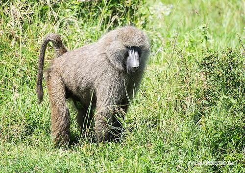 Kenia - Masai Mara 46