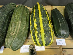 huge marrows