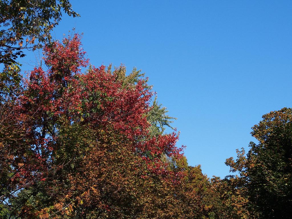 L'automne à Outremont