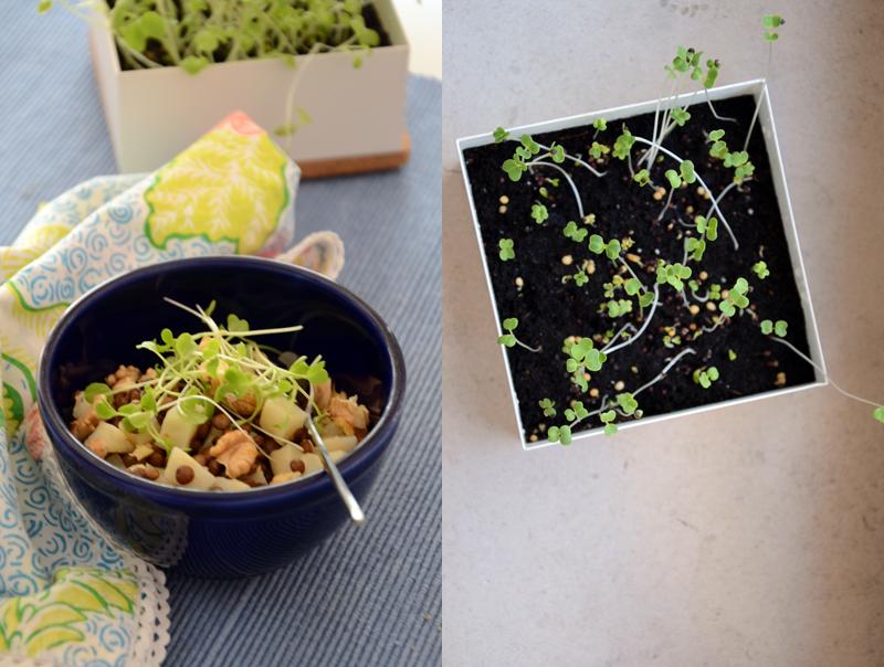 Salada de lentilhas e raiz de aipo (com microvegetais)