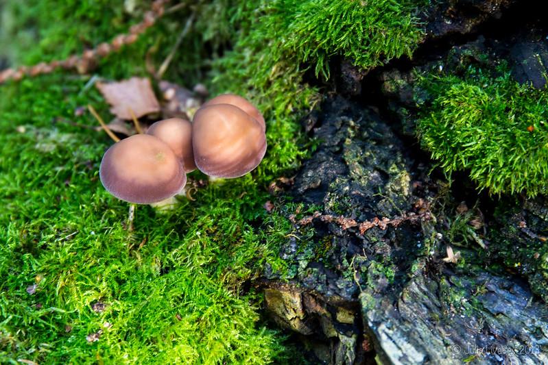 Fungi on log, Canford Heath