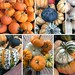 Pumpkin montage 2 by Food, Fash, Fit