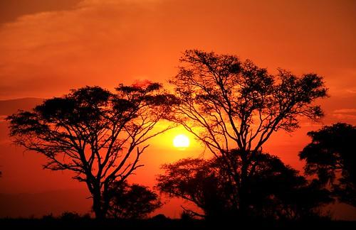 africa trees sunset sky orange sun sol clouds atardecer arboles safari cielo nubes savannah uganda naranja acacia sabana popiart