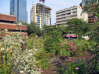 Gay Village 의 이미지. gay summer canada vancouver garden community britishcolumbia westend neighbourhood davievillage 2013