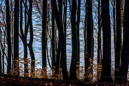 november autumn trees sky tree nature colors leaves norway outdoors norge leaf natur nopeople autumncolors beech høst larvik vestfold colorimage beechforest bøkeskogen høstfarger bøk autumnphotography