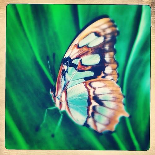 Butterfly (313/365) by elawgrrl