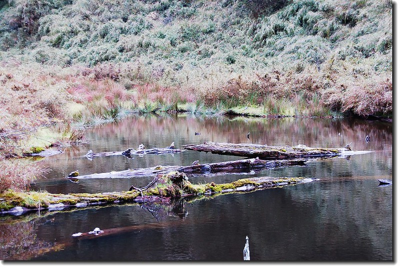 平安池 2