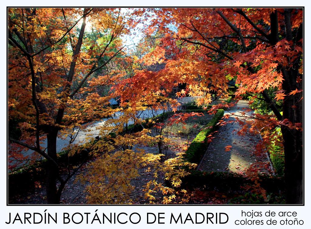 del Jardín Botanico de Madrid en noviembre de 2013-219