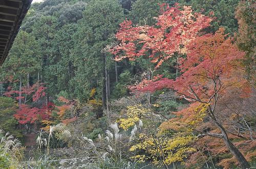 【写真】2013 紅葉 : 浄瑠璃寺/2019-08-22/IMGP3538