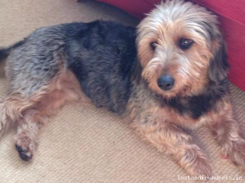 Sat, Nov 30th, 2013 Found Female Dog - Monivea Woods, Monivea, Galway