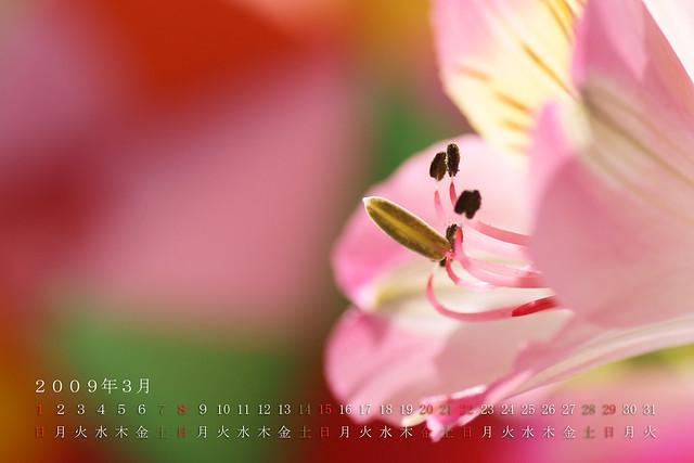 写真_2009年3月カレンダー