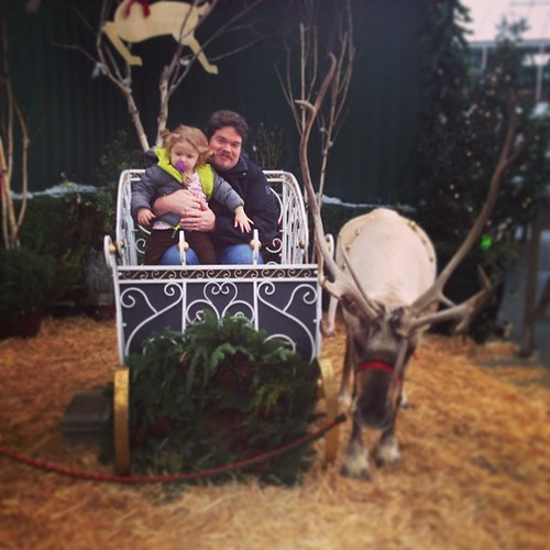 Day 1 of Advent Calendar Activities!  Visit Swansons Nursery's Live Reindeers. #MollyAdvent2013