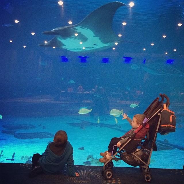 We loved the #rays at the #aquarium. #georgiaaquarium #familyvacation #brothers #fish