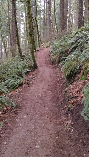 Powell Butte: 242nd Trail