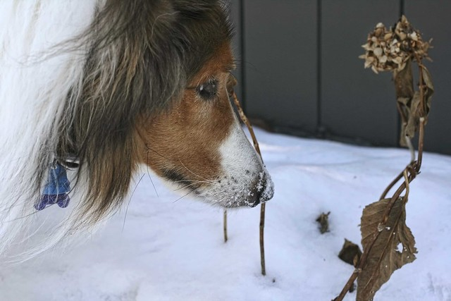 Ben loves winter...