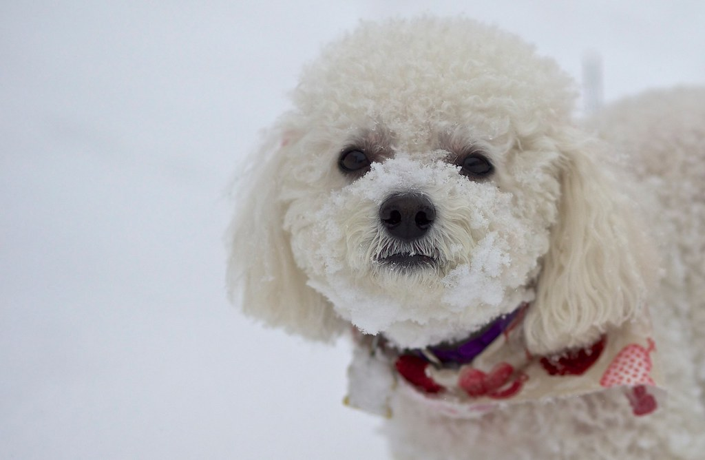 Mindy in the Snow