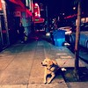 #dog #waiting #howard #street #soma #neon #sign #sanfrancisco #lynnfriedman by Lynn Friedman