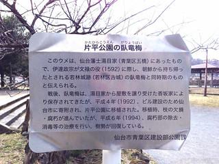 臥竜梅(片平公園2014/3/22)