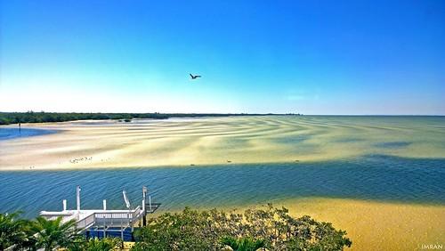 Osprey (Tampa) Bay - IMRAN™