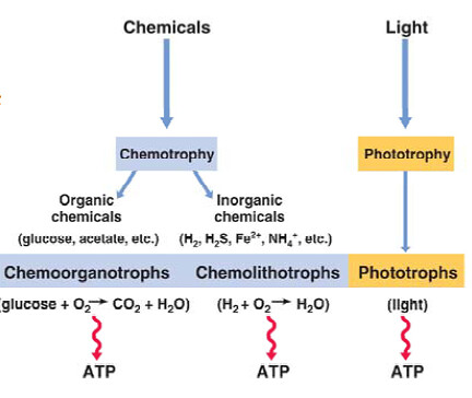Energie winnen via licht of via chemicaliën (Madigan et al (2009). Brock Biology of micro-organisms, 13e edition. Pearson Education Inc. San Francisco).