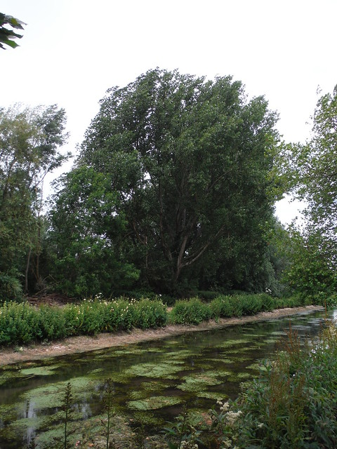 Tree on the Itchen Navigation