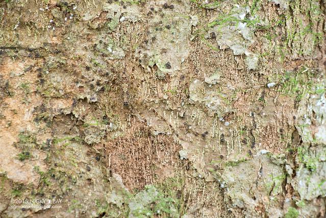 Huntsman spider (Sparassidae) - DSC_5487