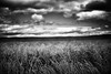 Crops next to the road to the St Abbs Head Lighthouse, Scottish Borders by iainmac2