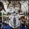 Whales #latergram